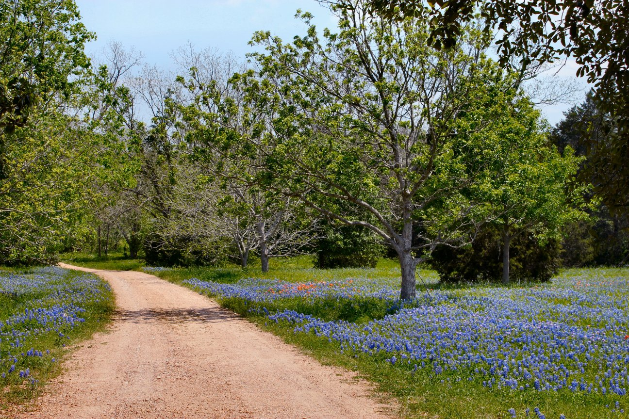 Texas hill country inside nanabread 39 s head for Driveway landscaping