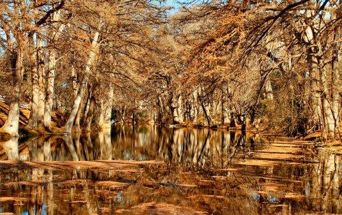 LeakeyTX - Sabinal River Cypress