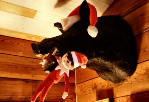 LeakeyTX - Wild Boar & Elf