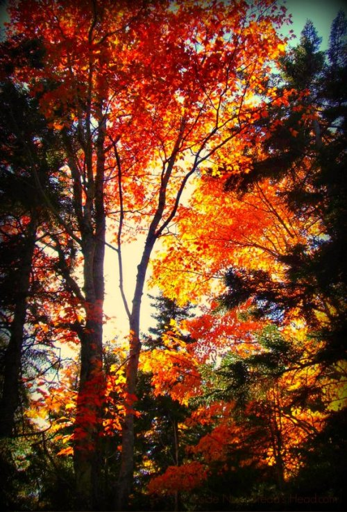 Acadia Maine - Sun Through Fall Foliage