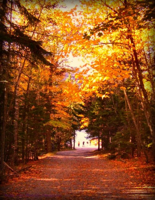 Acadia - Path to Jordan Pond