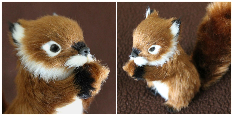 Cute squirrels in love - photo#5