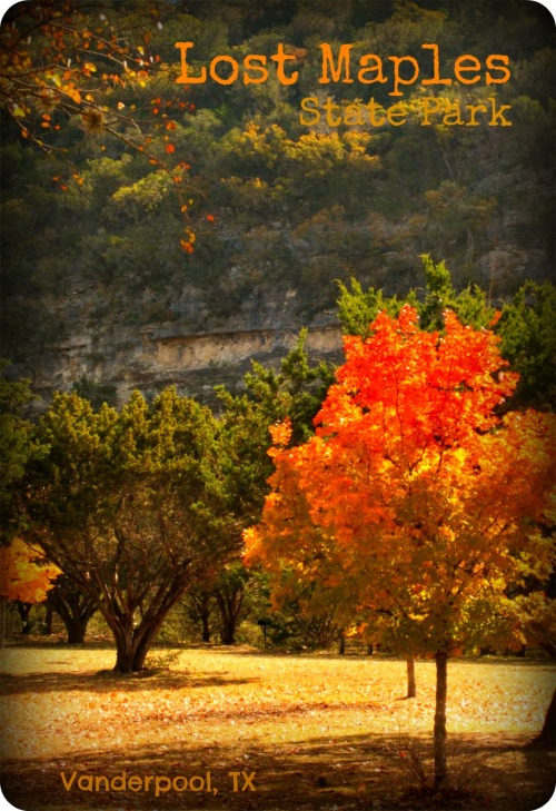 Lost Maples - Lone Maple with Cliffs
