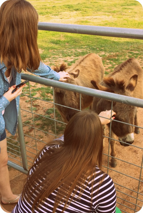 Mads & Megan - Petting Donkeys