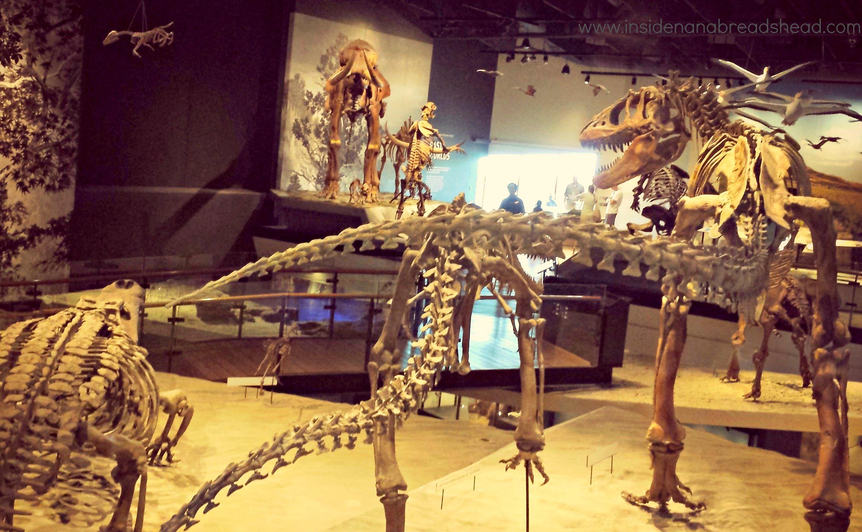 Foyer Museum Utah : Utah we really kept them hopping inside nanabread s head