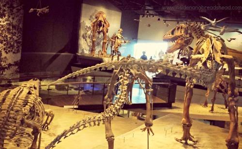 SLC Nat History Museum - Dinosaur Hall