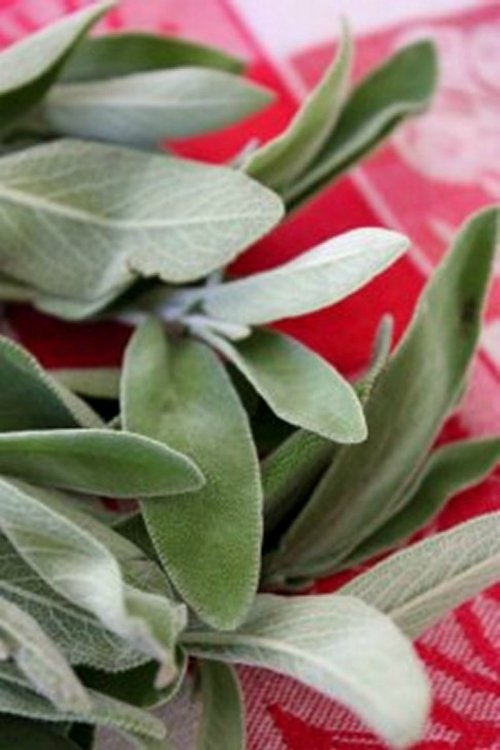 #OXOTurkey Day - Fresh Sage