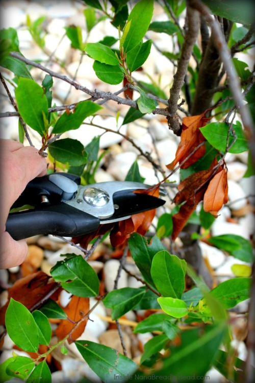 OXO Bypass Pruners
